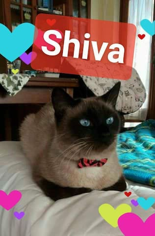 This is Sheva, one of my three cat.