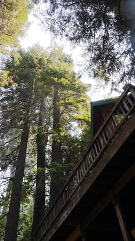 150' tall pines over the decks