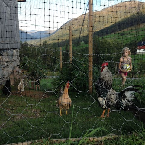 You can have a chat with our two roosters and three hens from old Norwegian and Icelandic breeds