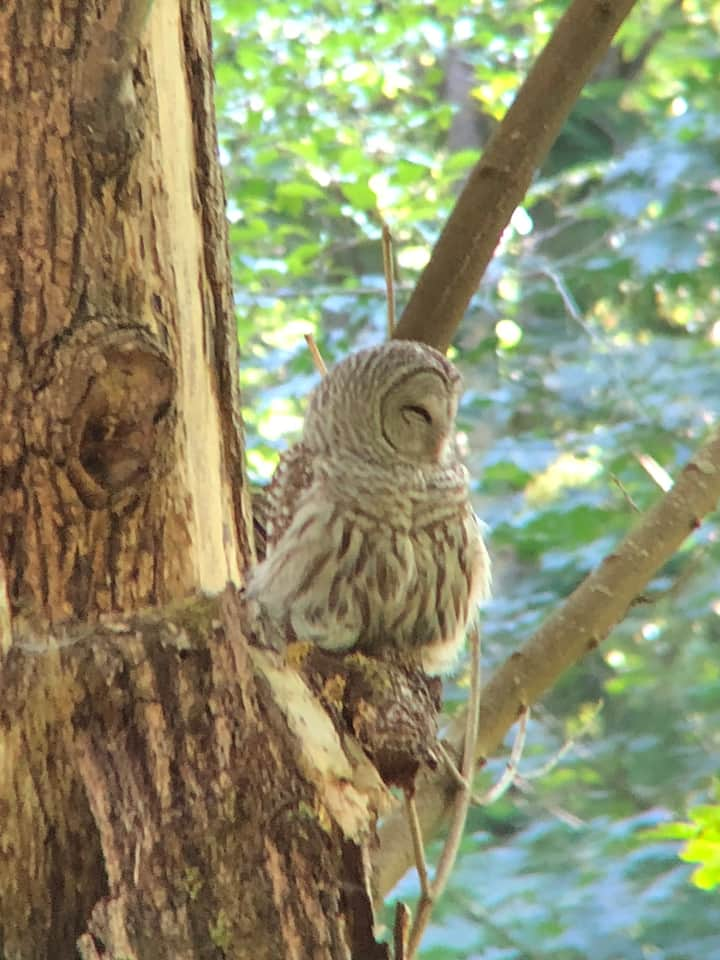 Hard to believe owls live in the city!