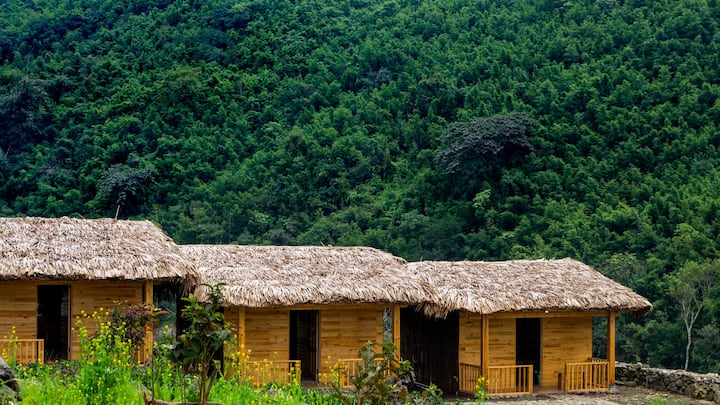 Odo House - Lemon cabin