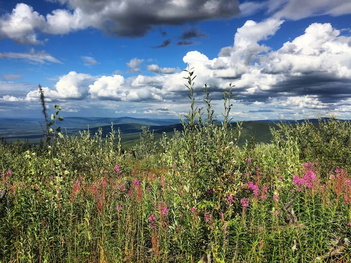 Mid-summer ridge line views.