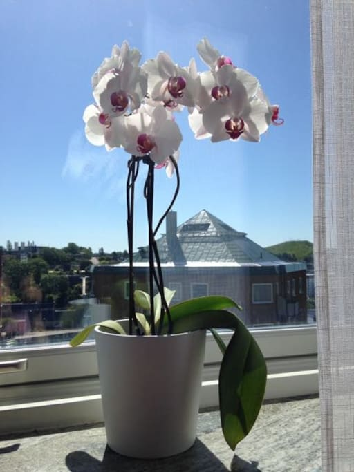 our orchids!
