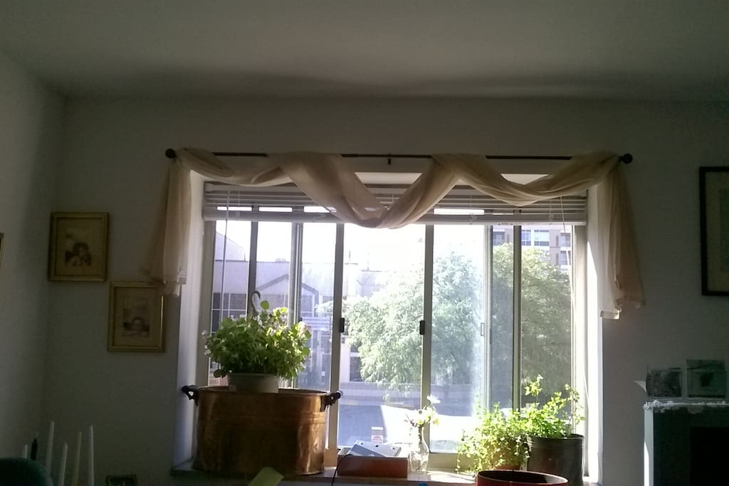 Sunny Window in Living room
