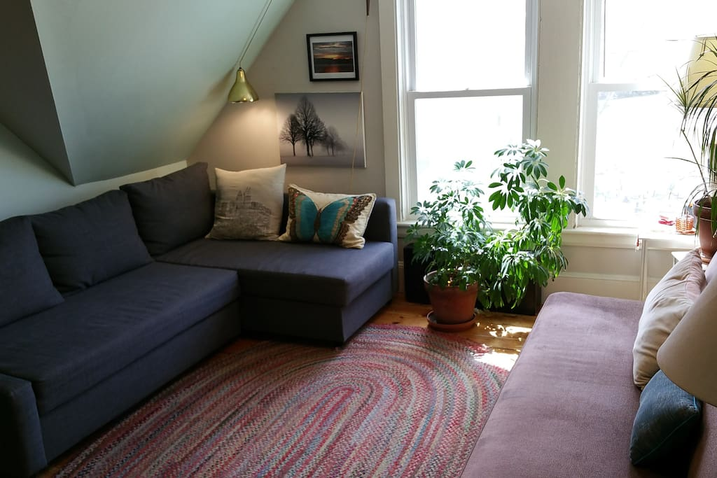 sunny dog friendly place apartments for rent in portland maine