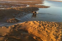 Woody, our Cocker Spaniel enjoying the sand and sea at Wells