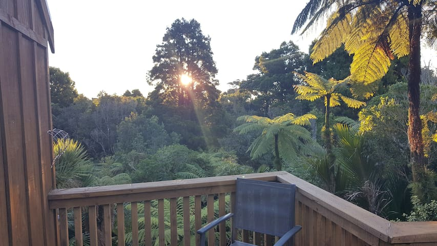 Secluded Rainforest Cabin amongst the Nikau Palms