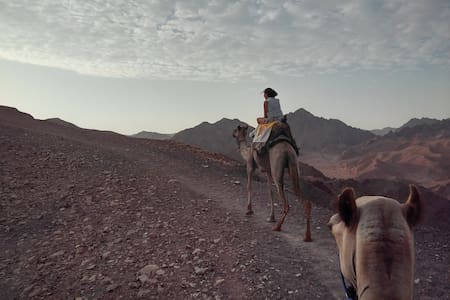 Camel tour+overnight stay on edge of Ramon crater