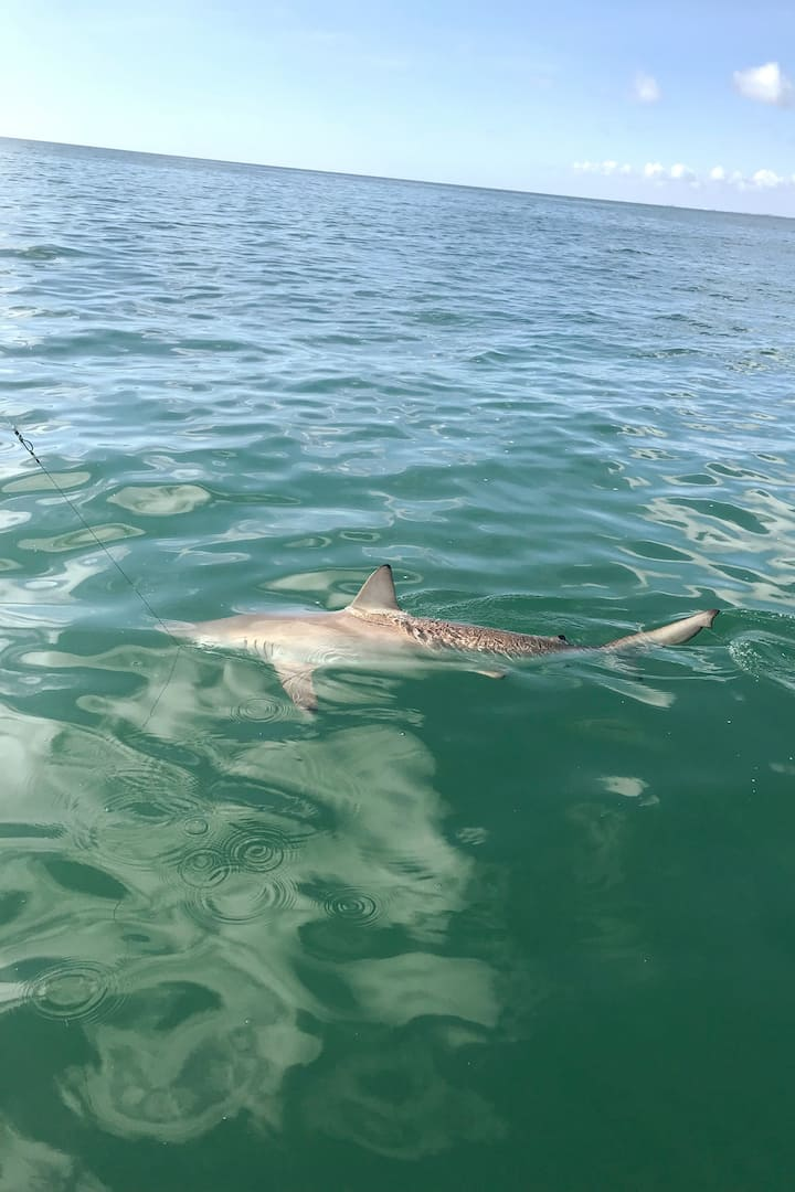 We often encounter sharks on these tours