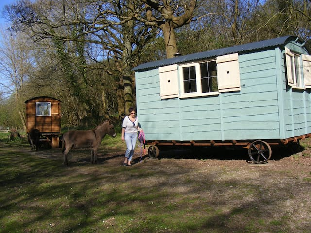 Waydown Shepherds Huts - Pyecombe - Hut
