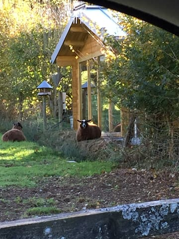 Our small flock of friendly sheep are able to come right up to the living room glazing (as pictured).