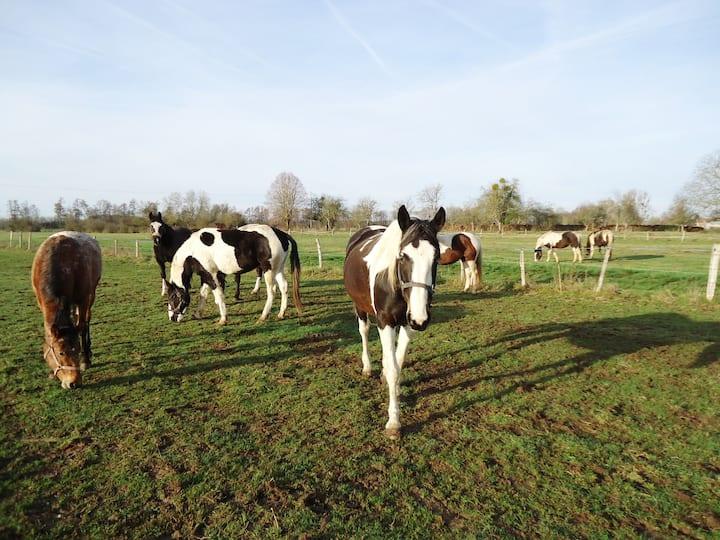 GITE DU PETIT PAYSAN - Repos au milieu des chevaux