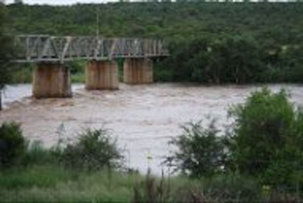 Watch the hippos swim in the Olifants River