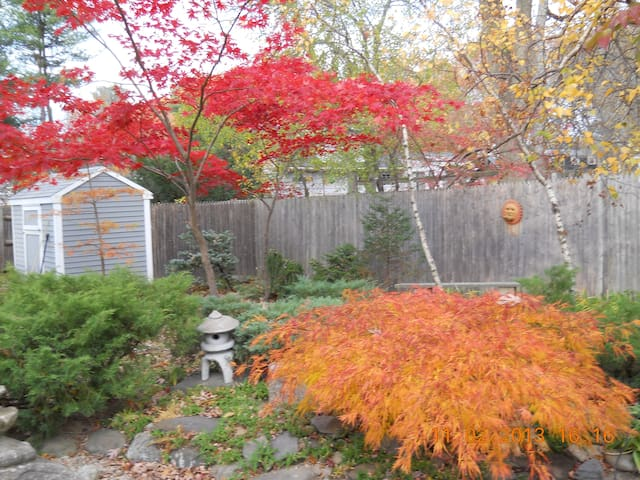 View of the backyard in fall. You don't have to leave for leaf peeping, but we are close to major highways for day trips to classic scenic routes in New England.