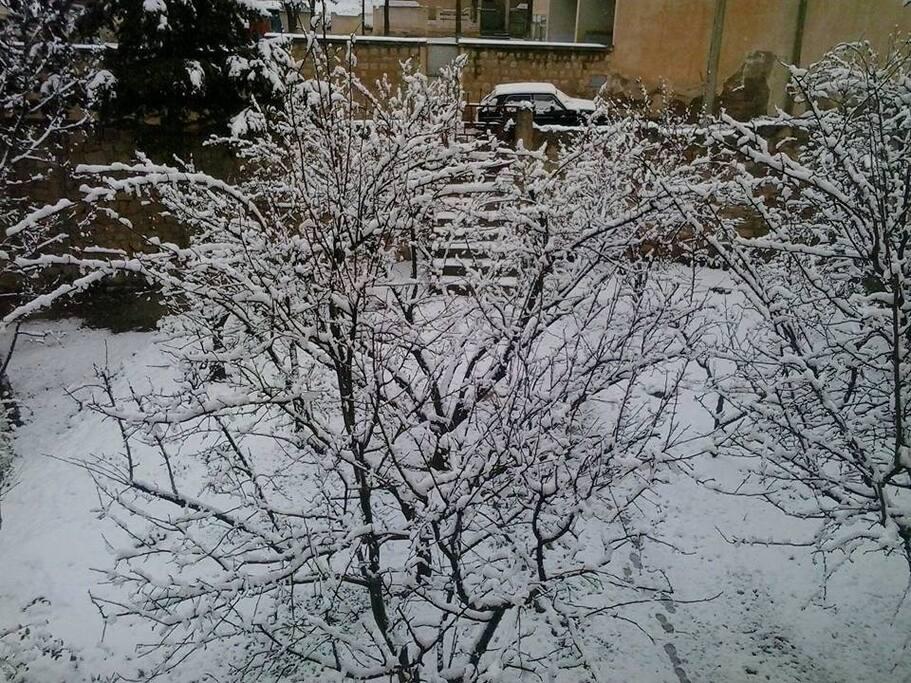 le jardin de la maison l'hiver