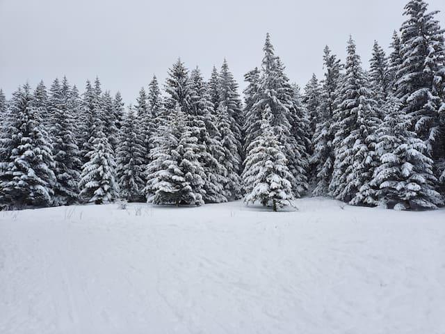 appartement en montagne pied des pistes ski vtt ..