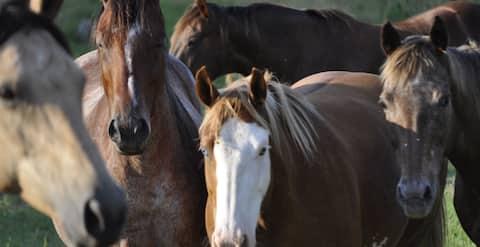 Creek-side Cabin *Staycation* on Horse Farm