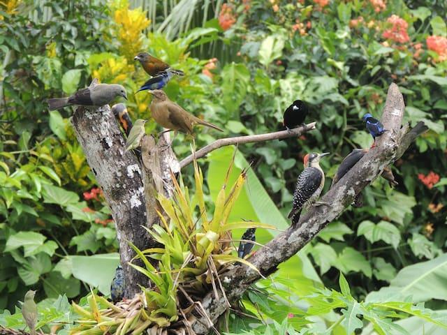 En el jardín, se cuenta con comederos con frutas para observación de aves