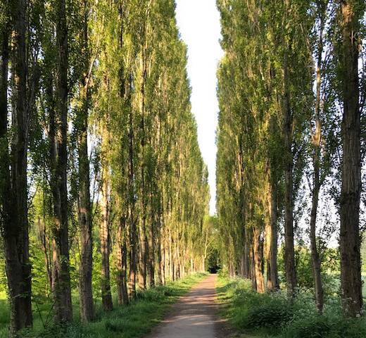 Fletcher Moss park, 30seconds walk.