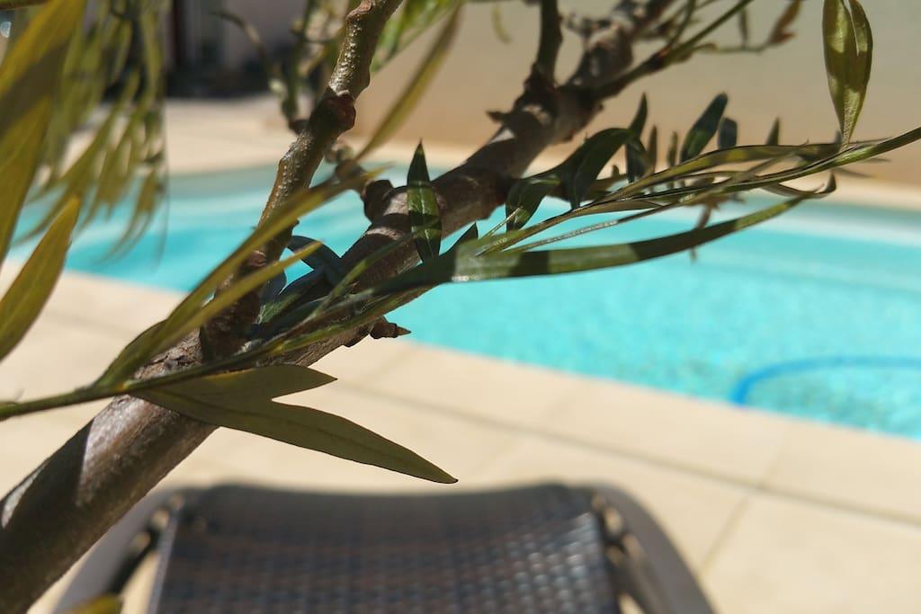 Casa Vanilla Grande - L'espace piscine - Le chant des cigales au bord de l'eau