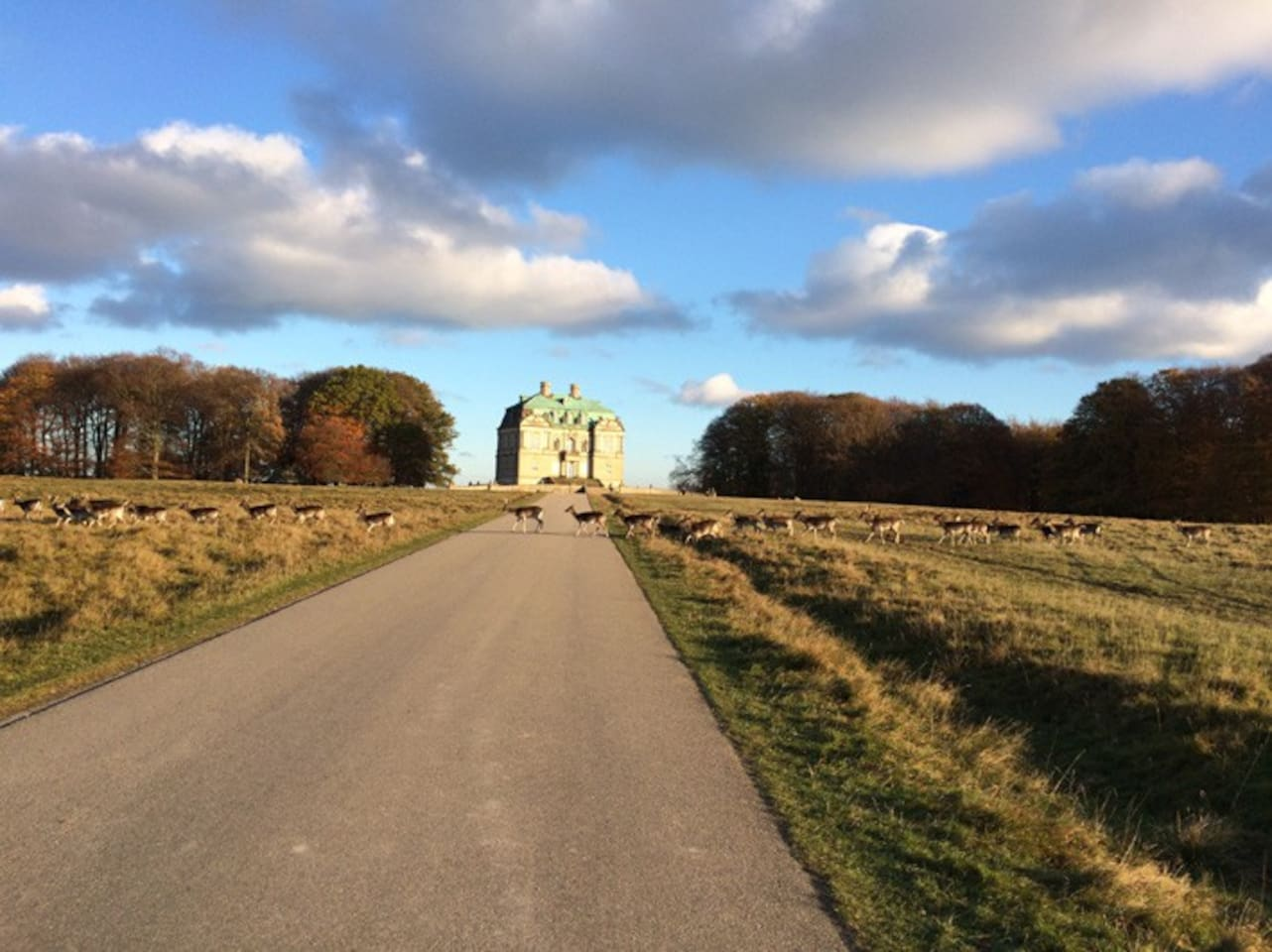 Dear park Dyrehaven in Klampenborg 30 minutes bikeride from here (or take bus/train)