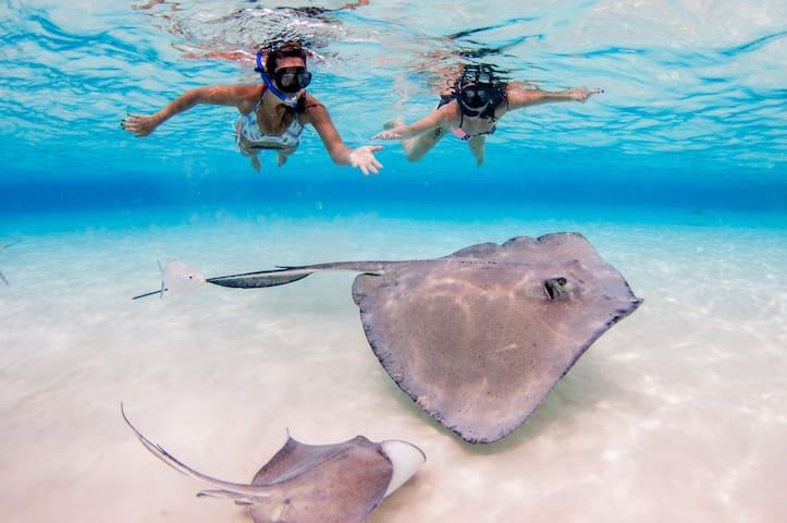 Visit Stingray City, Swim  with Stingrays, the best in the Caribbean!