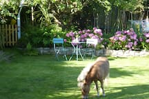View towards the tree house. The pony is not a permanent visitor