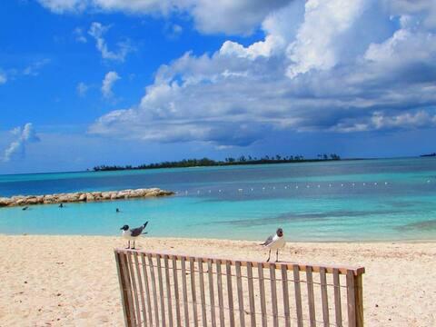 Bahamanest 4