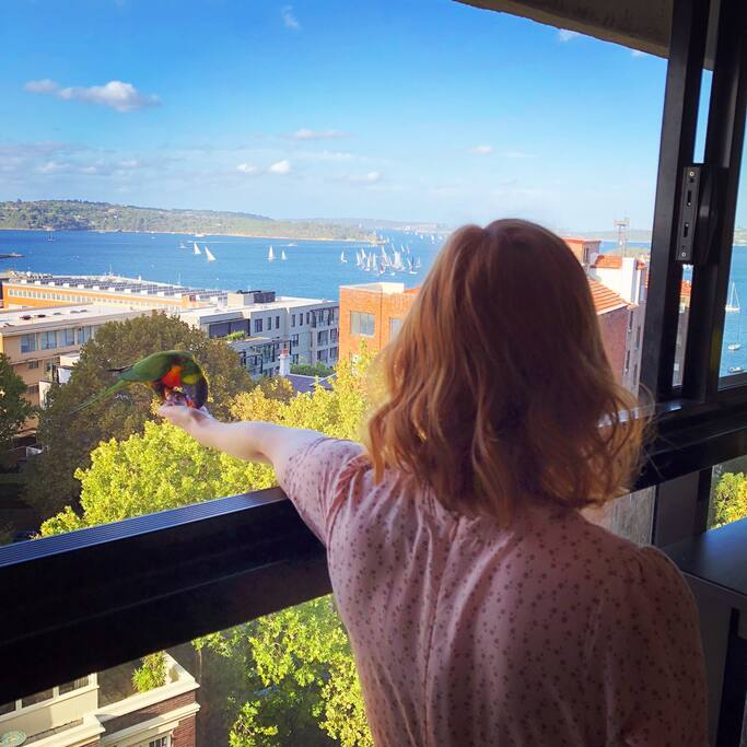 Feeding wild rainbow lorikeets with Sydney Harbour view