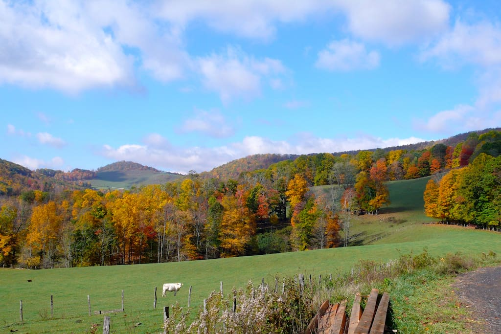 View from driveway overlooking pasture