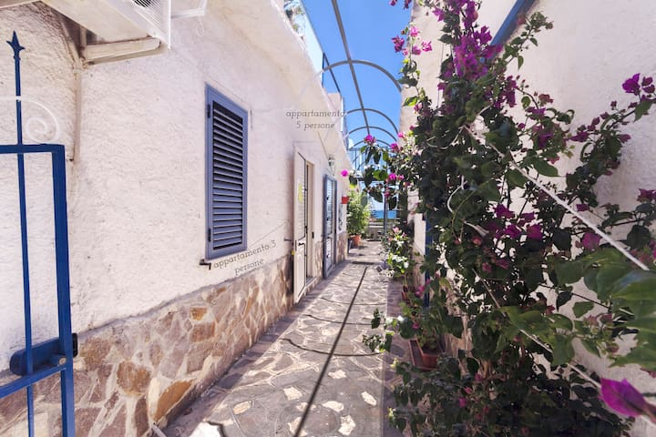 6P apartment with garden 80 meters to the sea