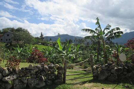 Coffee farm refuge in the heart of the Amazonas - Shipasbamba District