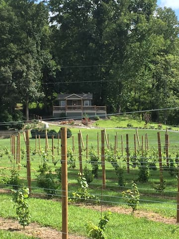 Mountain Vineyard Cottage - Fletcher