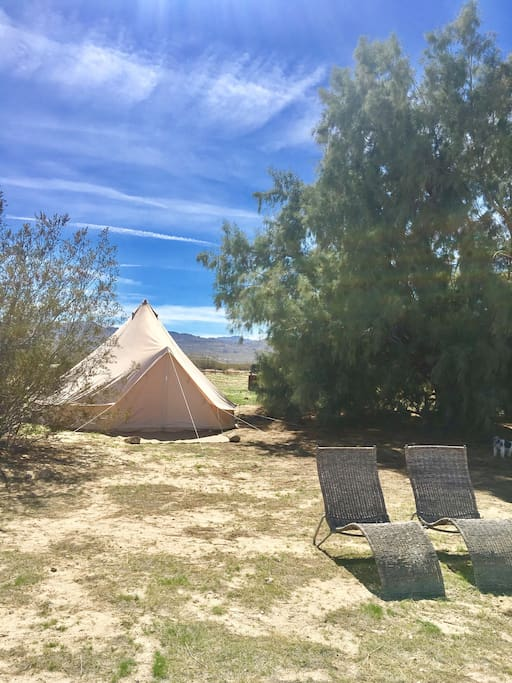Tent shaded by massive Salt Cedar Tree and pair of lounge chairs poised for relaxing.