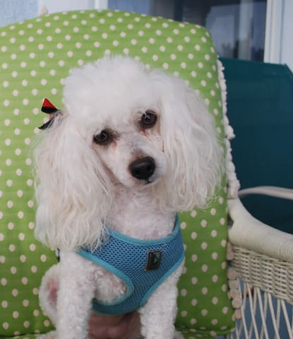Princess Mimi: small pets allowed with a $100.00 non-redundable deposit.