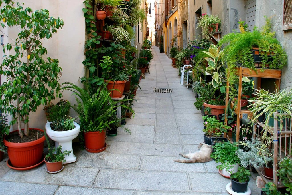 """Cagliari is one of the """"greenest"""" Italian cities. Every inhabitant of Cagliari has access to 87.5 square metres (942 sq ft) of public gardens and parks."""