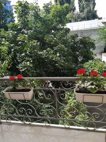 Balcony view to the leafy courtyard