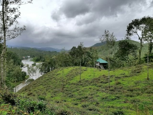 Nestled on the banks of river Periyar, surrounded by Tea plantations and wooded forests at an altitude of 2600 ft above sea level  - Welcome to God's own tree house.  Clean mountain air, pleasant cool climate, amazing scenery. Welcome to Noah's Nest.
