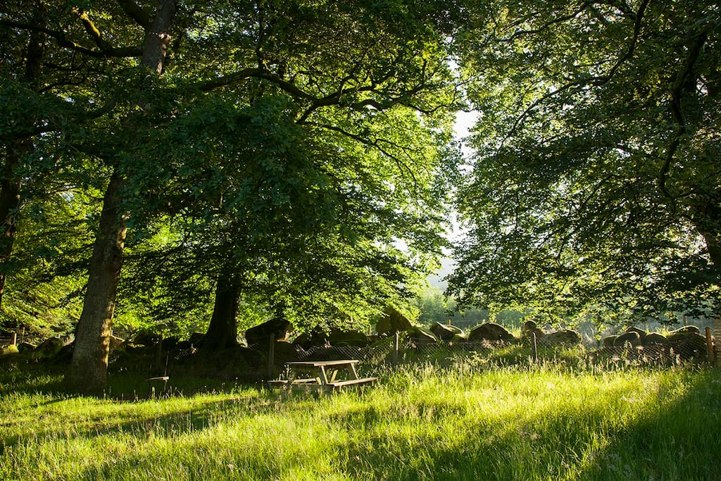 Natures paridise - An acre of grounds and gardens - Here is our upper forest garden