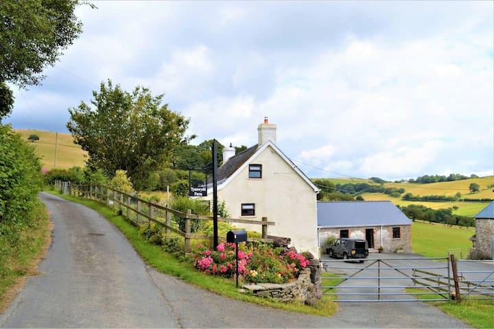 Welcome to Tynewydd Farm