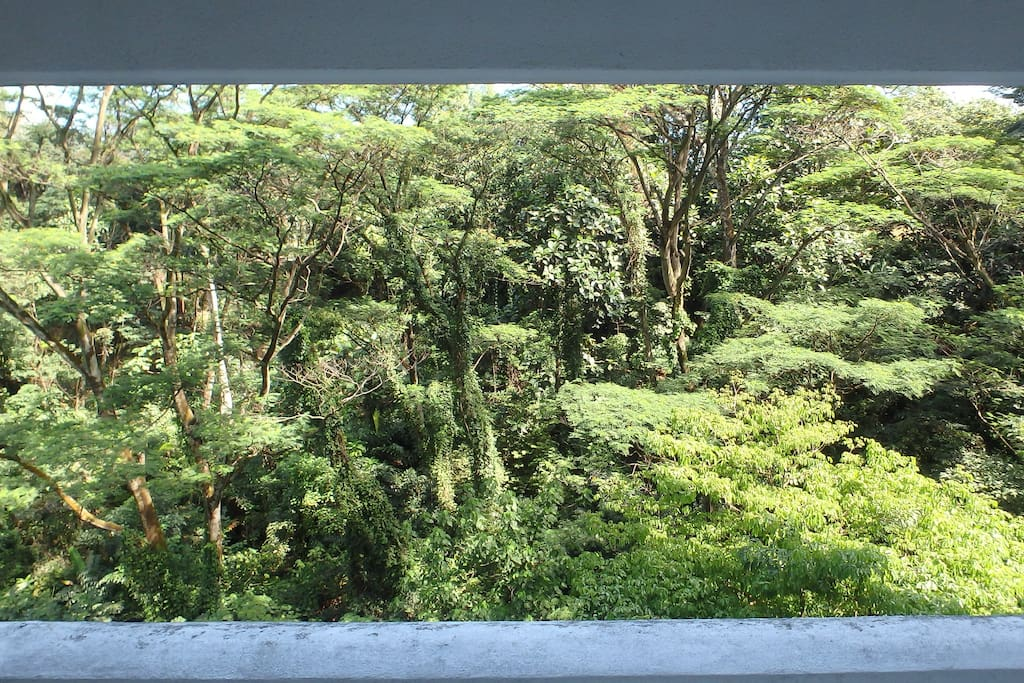 jungle view from the room's window