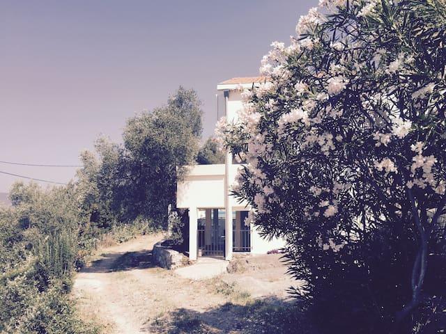Villa Olive Tree, Mrkovi, Lustica - Luštica - Villa