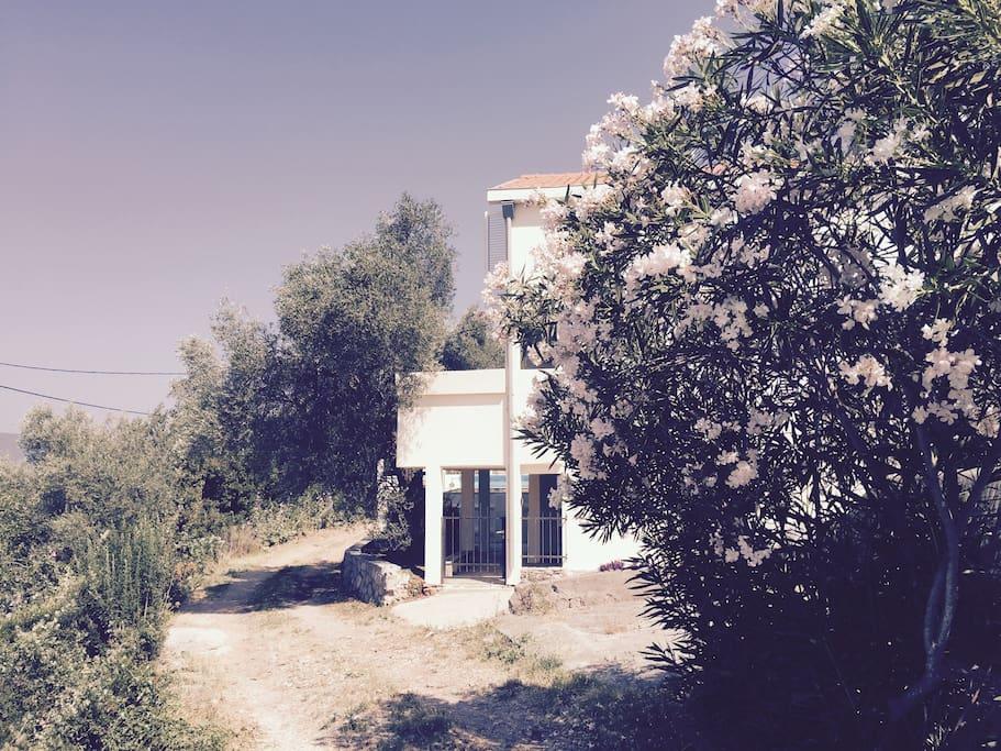 Private Road outside Villa Olive Tree