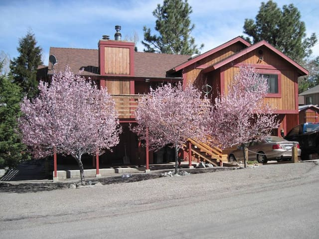 Wrightwood B&B,     amid the pines
