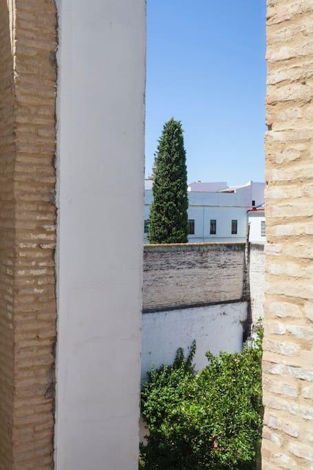 Ciprés de un convento adjunto y Naranjo de patio vecina.