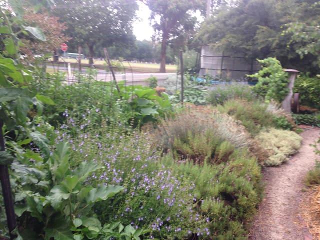 Garden Bungalow - Alexandra - Bungalow
