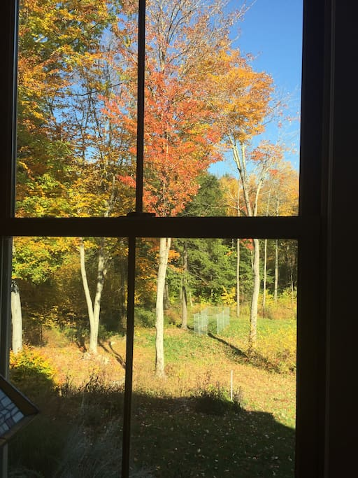 Looking out the dining room windows in October
