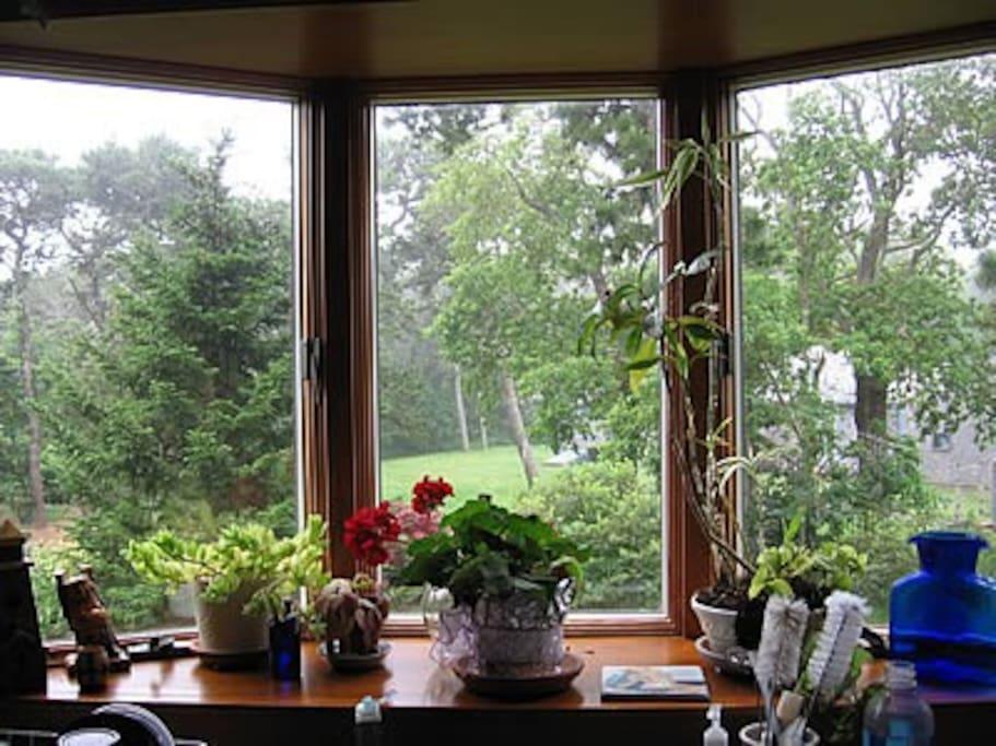bay window overlooks garden, lawns and wetlands