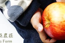 歌瑟亞出產『高山水果』