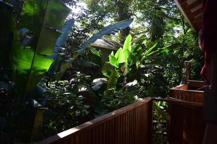 Charming Jungle Cabin - hidden beach nearby